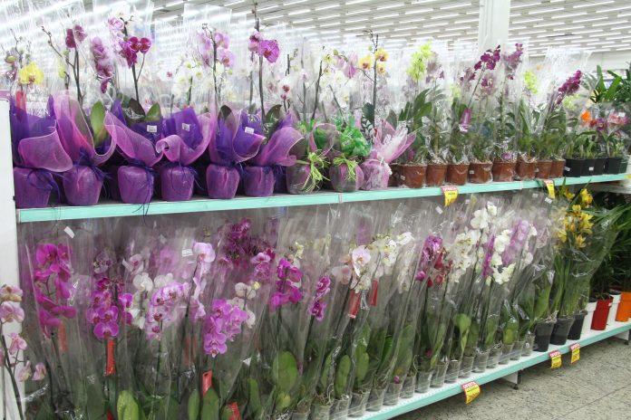 Flores no supermercado COOP. Foto: Divulgação