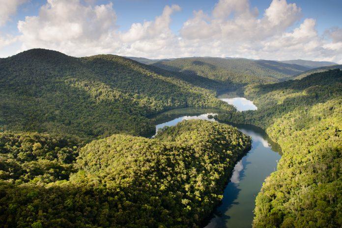 Dias Mundiais da Floresta (21) e da Água (22) reforçam a importância da conservação do bioma para segurança hídrica. Foto: Divulgação